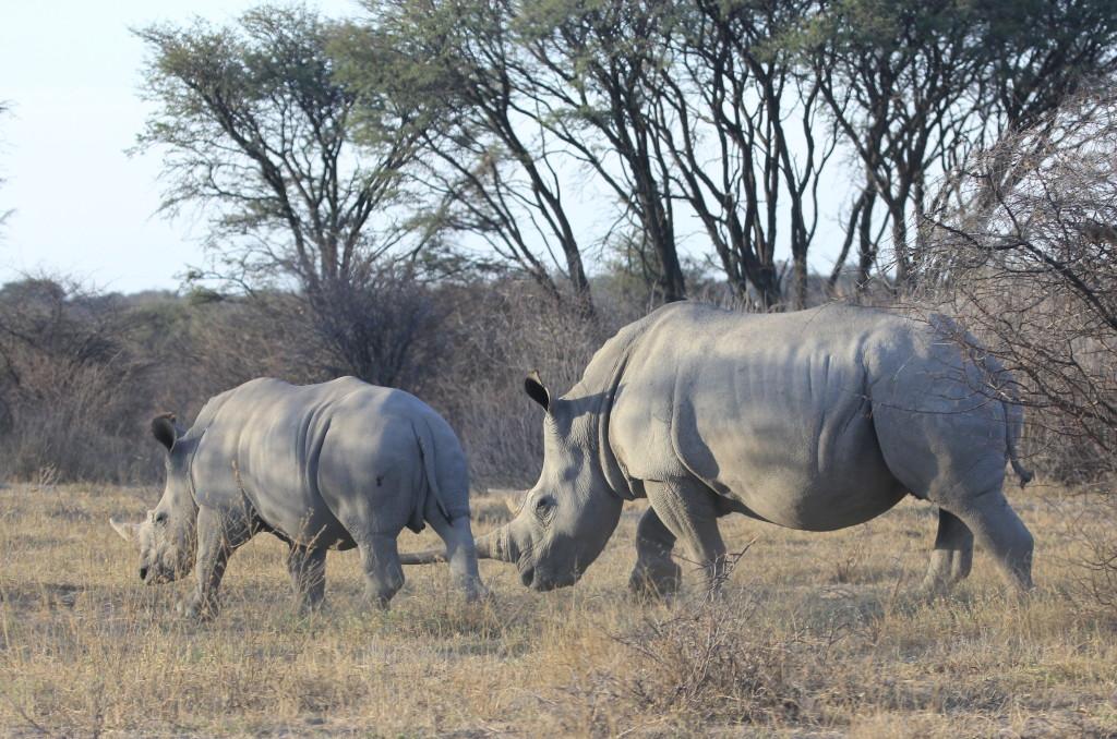Rhino- Zambia