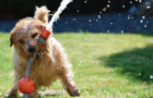 How to Keep Your Pets Safe in your Garden